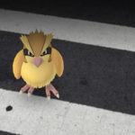 Pokemon GO Fast Leveling